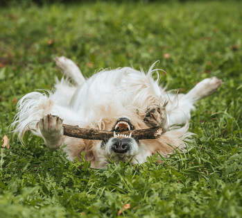 8 Premium Amenities Your New Community Should Have Dog Image