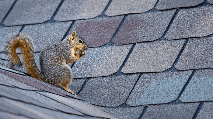 6 Fall Maintenance Tips for Homeowners Rodent Image